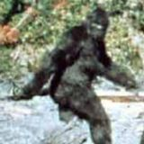newnumbertwo - bigfoot research volume one