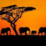 Christian Henschel auf Safari#001