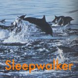 Sleepwalker - April 16, 2020 - Encyclopedie Cousteau