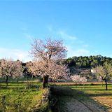 Ibiza 2019 Almond Blossom Balearic Spring Chilling