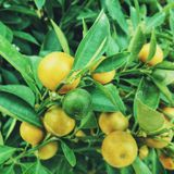 Lemontree On The Balcony Mix