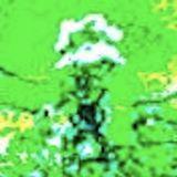 HakanStone 28 November 2012 'Flowers'