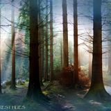 Misty Forest Hues