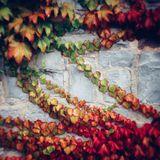 Autumn Mix 2016