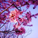 Set Spring Begins
