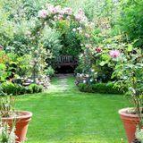 Secret_tips_for_the_ultimate_veggie_garden