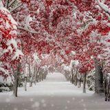 Winter Wonderland Trap mix (Chilltrap, Chillstep, Downtempo and Hip Hop) December 2018
