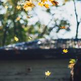 Điều bí ẩn của mùa thu || Phần 1|| Lynh Miêu