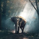 Elephant's March