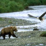 The Big Show 001: Bears & Eagles