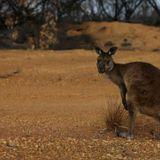 Terania Creek 40 years on and devastation on Kangaroo Island