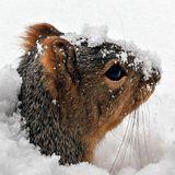 Po hlavě do sněhu / Manear b2b Crunchy