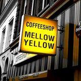 Mellow Yellow 2010