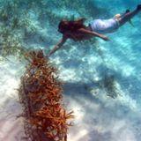 Counterpart Voices - Coral Gardens