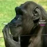 Deep Monkey