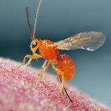 L'amore consuma anche gli insetti. Intervista a Giovanni Benelli