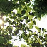 「木の葉の間からこぼれる夏の夕暮れの最後の光のような」MIX