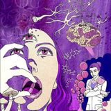 A teaste of Psychedelics