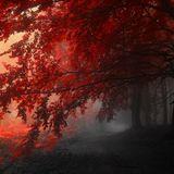 24/10/17 Live Mix: Crimson Reflections