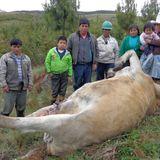 Entrevista pobladores San José - Muerte animales.mp3