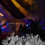 Lsd-Licious int Loungevity Tent @ Solfest 2015