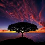 SODIC - Behind the sunset