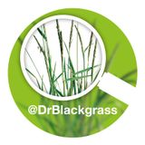 May 2016 – End of season black-grass control