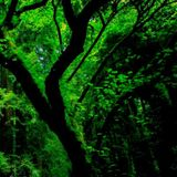Kudzu Jungle 9