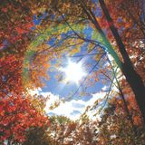 Indian Summer - Redjay Organic Psychedelic Progressive Trance Mix