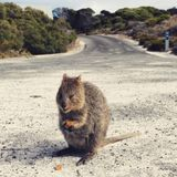 Catch Up Tuesday - David Smith Beach Volley Ball WA / When have you COCKED up? / Allan finds a Quokk