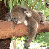 Florent Vazquez - Chilling Koala Deep House Mix