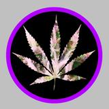 Weedo - Herbal Mix (Mary Jane Berlin Cannabis Expo Mixtape), May 2016