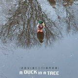 A Duck in a Tree 2019-08-24   The Other Side of a Hemisphere