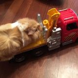 Hamster Tow Truck