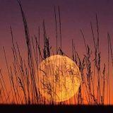 Harvest Moonbeats