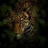Warming up the Jaguar // Movement Medicine Warm up