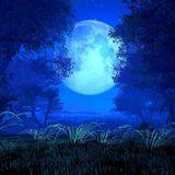 Moonshine Treasure