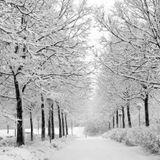 A Deep Winter Night