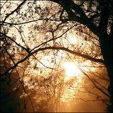 Mix 72 - Herbstgold
