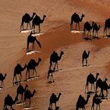 Desert expedition #4
