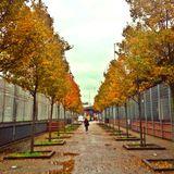 Mystic Trip - November Mix (2012)