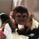 MonkeyTimeRadioHour_28-Nov-2012