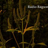 07/08/18 - Radio Ragweed (Ambient Animal)