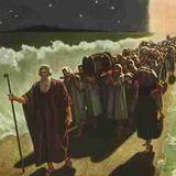 Comme au temps de Noah, par Daniel Steen