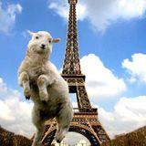 716 Exclusive Mix - TLR : Pompe Le Mouton Mix