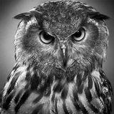 anti/d0te // Nocturnal Hymns / Dark & Trippy