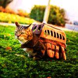 Les mixtapes du chat-bus | chat-pitre 01 | (Alex Terror)