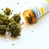 Medical cannabis red tape leaves parents facing jail
