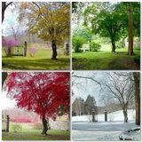 il Luogo Comune - Non ci sono più le mezze stagioni