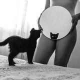 episode 265 - black cat, white cat